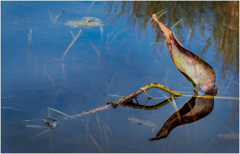 Adirondacks Bog River Hitchins Pond 18 September 2019