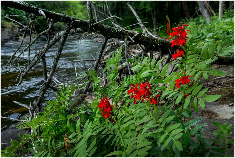 Adirondacks Round Lake Whitney Wilderness Outlet Stream 11 July 2016