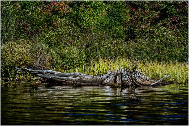 Adirondacks Cedar River Flow Shoreline 2 September 24 2016