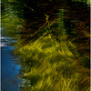 Adirondacks North Branch Moose River Grasses 18 July 2016