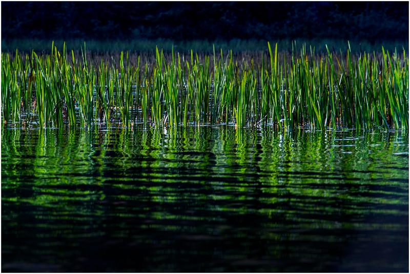 Adirondacks Cedar River Flow Reeds 8 September 24 2016