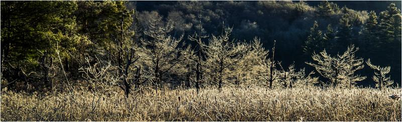 Adirondacks North Creek November 2015 Austin Pond Morning Frost 3