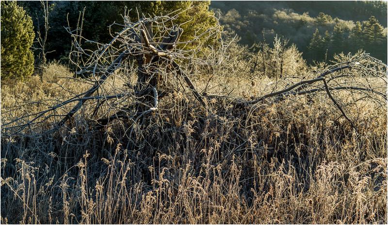 Adirondacks North Creek November 2015 Austin Pond Morning Frost 2