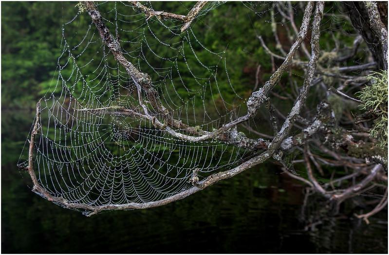 Adirondacks Newcomb Lake Spider Web 4 July 2017