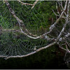 Adirondacks Newcomb Lake Spider Web 4 July 2017
