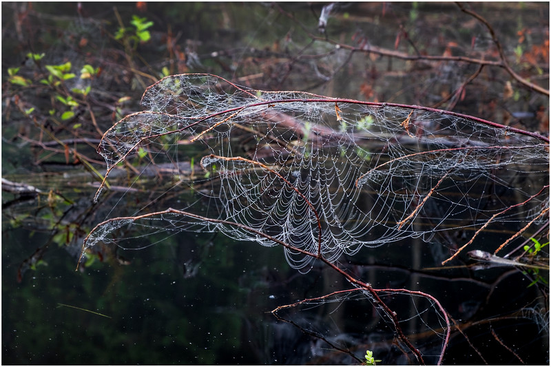 Adirondacks Newcomb Lake Spider Web 1 July 2017