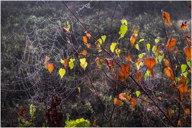 Adirondacks Cary Lake Morning Mist 77 September 2017