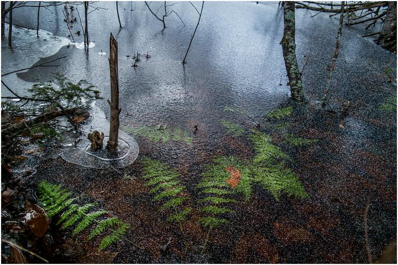 Adirondacks Lake Abenakee 9 December 2016