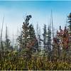 Adirondacks Long Lake Roadside Mist 4 September 25 2016