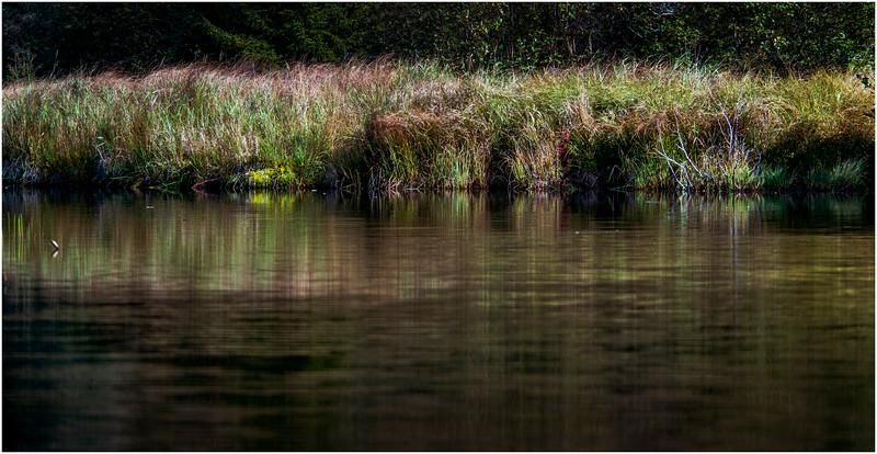 Adirondacks Cedar River Flow Shoreline 9 September 24 2016