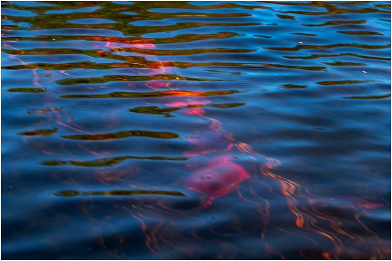 Adirondacks Forked Lake Paddle 27 October 2019