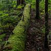 Adirondacks July 2015 Grassy Pond Trail Log of Moss