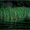 Adirondacks Cedar River Flow Reeds 3 September 24 2016