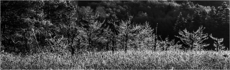 Adirondacks North Creek November 2015 Austin Pond Morning Frost 3 BW