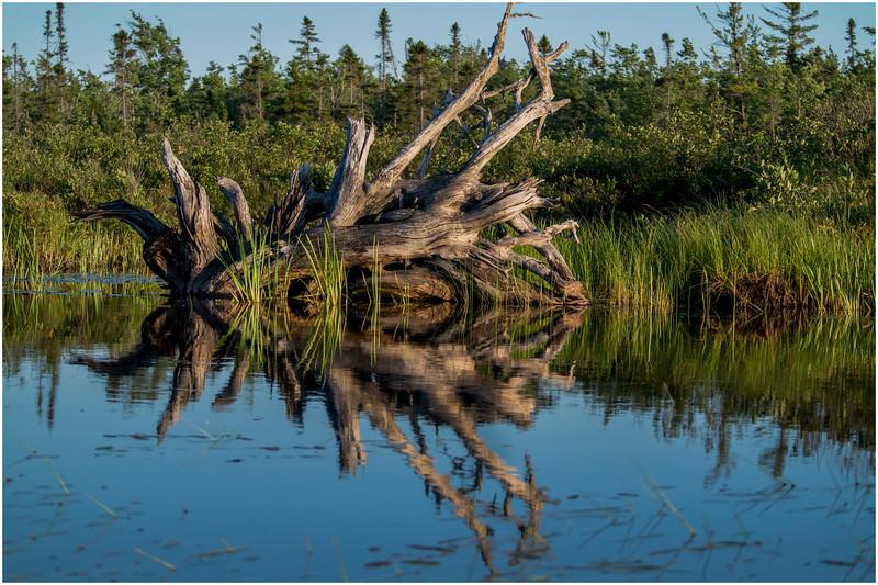 Adirondacks Forked Lake Wetlands Shoreline 11 July 2017