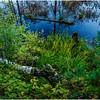 Adirondacks Lake Durant Swamp 1 September 25 2016