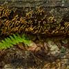 Adirondacks July 2015 Oneil Flow Road Woods Shelf Fungi and Fern