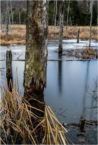 Adirondacks Lake Durant November 2015 Frozen Pond 9