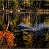 Adirondacks Utowana Utowana Lake Colors and Frost Bog October 2009