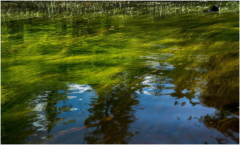 Adirondacks North Branch Moose River Grasses 73 July 2016