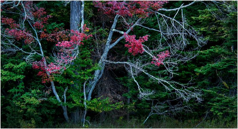 Adirondacks Cedar River Flow Shoreline 24 September 25 2016