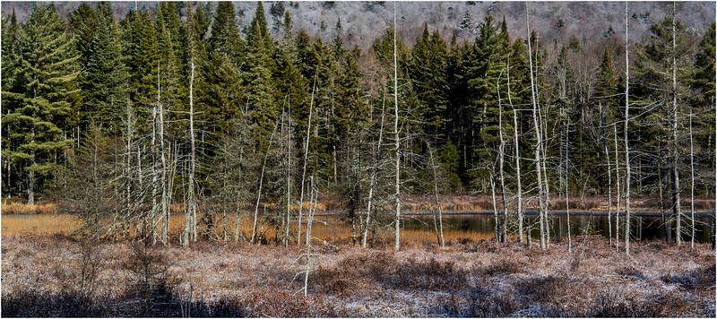 Adirondacks Long Lake November 2015 Wetlands at Sabattis Road 1