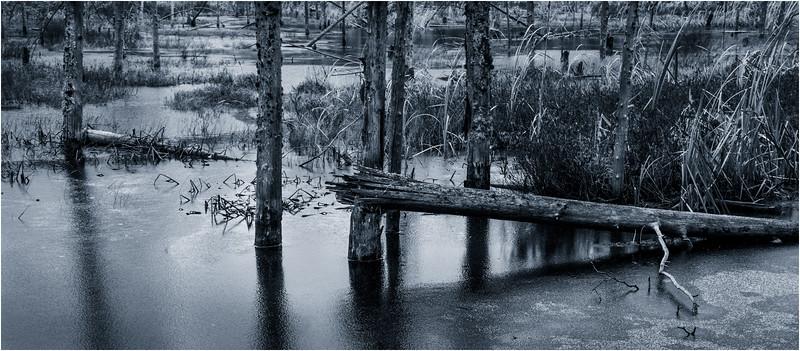 Adirondacks Lake Durant November 2015 Frozen Pond 5 DUO