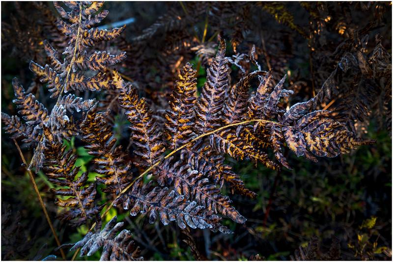 Adirondacks Long Lake Fern Frost 5 September 25 2016