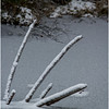 Adirondacks Indian lake Puddle with Deadfall 1 December 2016