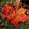 Adirondacks Saranac Leaves and Lichen October 2009