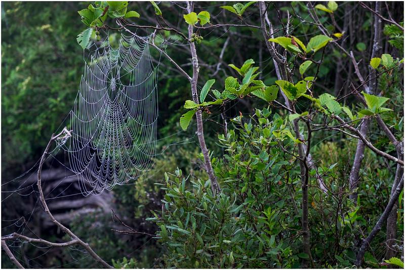 Adirondacks Newcomb Lake Spider Web 3 July 2017