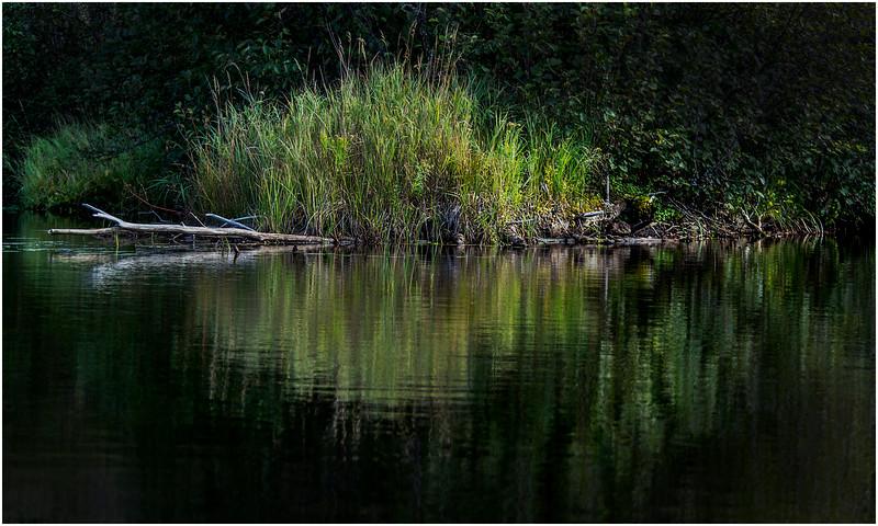 Adirondacks Cedar River Flow Shoreline 10 September 24 2016