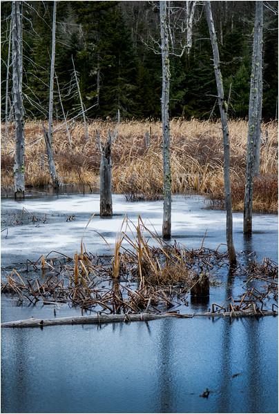 Adirondacks Lake Durant November 2015 Frozen Pond 13