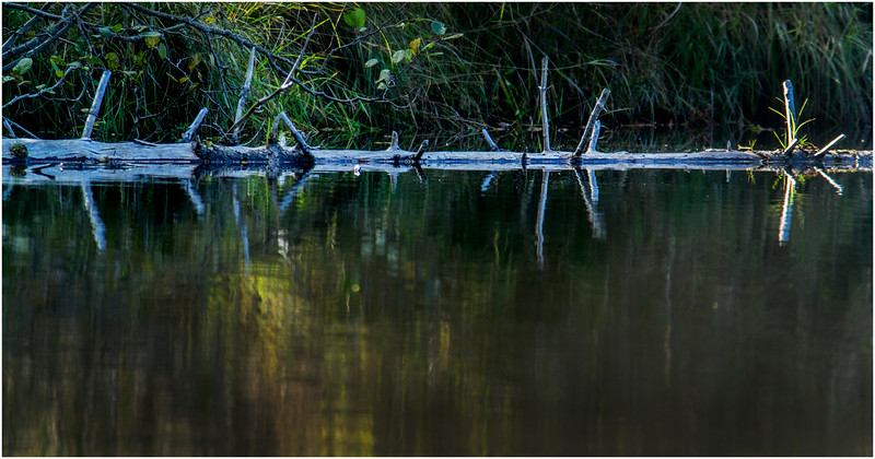 Adirondacks Cedar River Flow Shoreline 21 September 25 2016