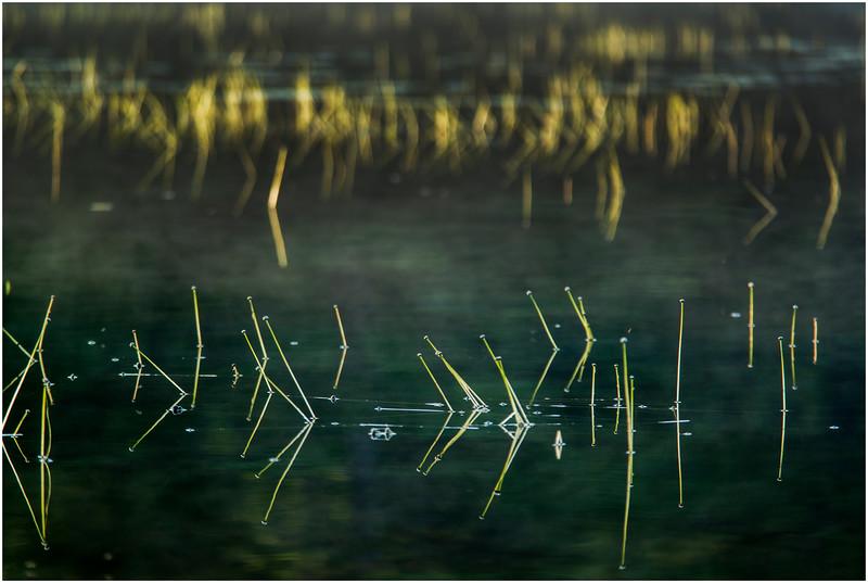 Adirondacks Forked Lake Morning Light Reeds 4 August 2016
