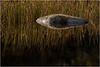 Adirondacks Cedar River Flow Rock and Grasses 2 October 2012