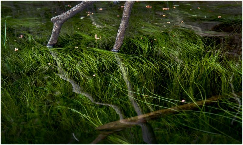 Adirondacks North Branch Moose River Grasses 69 July 2016