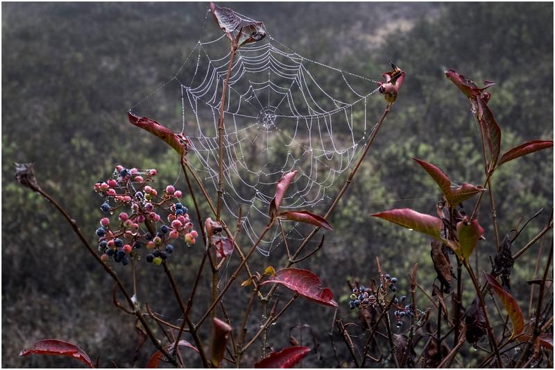 Adirondacks Cary Lake Morning Mist 72 September 2017