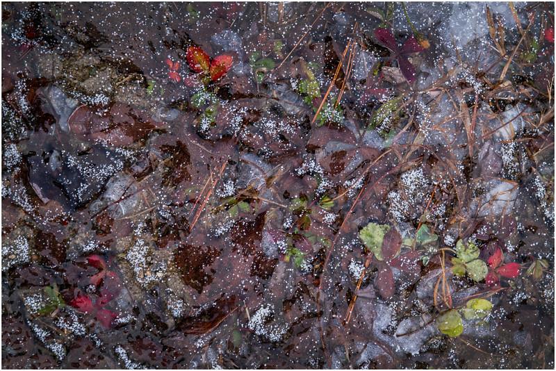 Adirondacks Lake Abenakee Puddle Frozen Surface 1 December 2016