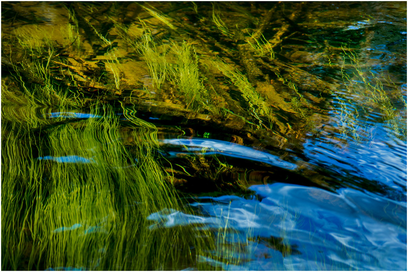 Adirondacks North Branch Moose River Grasses 11 July 2016