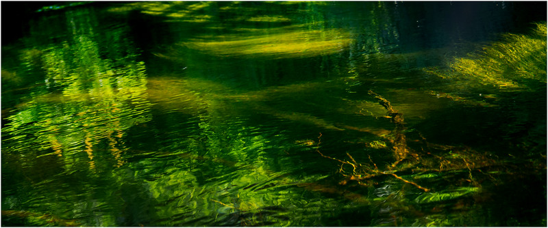 Adirondacks North Branch Moose River Grasses 78 July 2016