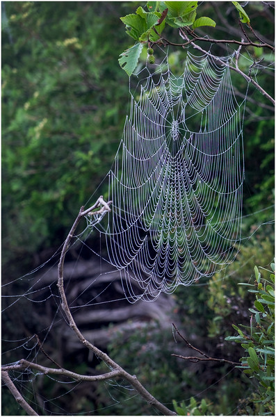 Adirondacks Newcomb Lake Spider Web 2 July 2017