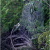 Adirondacks Newcomb Lake Spider Web 2 July 2017
