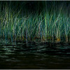 Adirondacks Cedar River Flow Reeds 7 September 24 2016