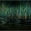 Adirondacks Cedar River Flow Reeds 7 September 24 2016