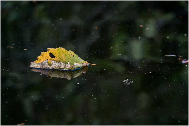 Adirondacks Cedar River Flow Leaf 2 September 24 2016
