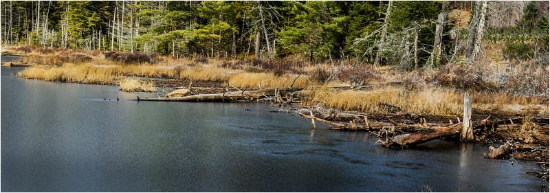 Adirondacks Long Lake November 2015 Wetlands at Sabattis Road 19