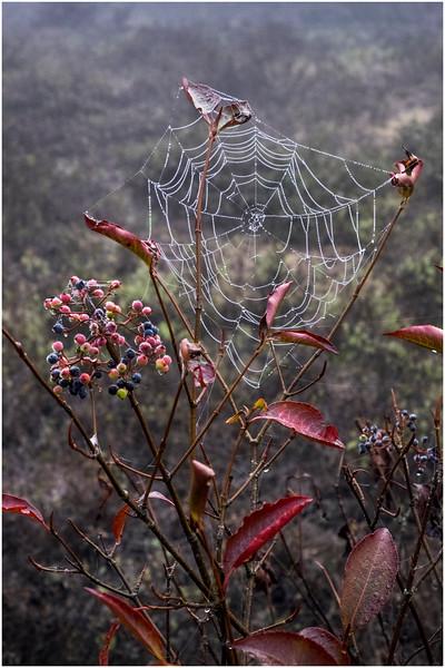 Adirondacks Cary Lake Morning Mist 73 September 2017