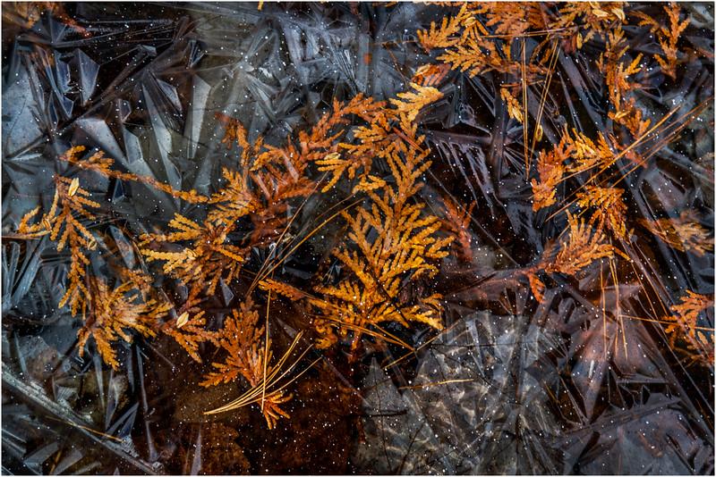 Adirondacks Long Lake November 2015 Buttermilk Falls Leaves and Needles in Ice 2