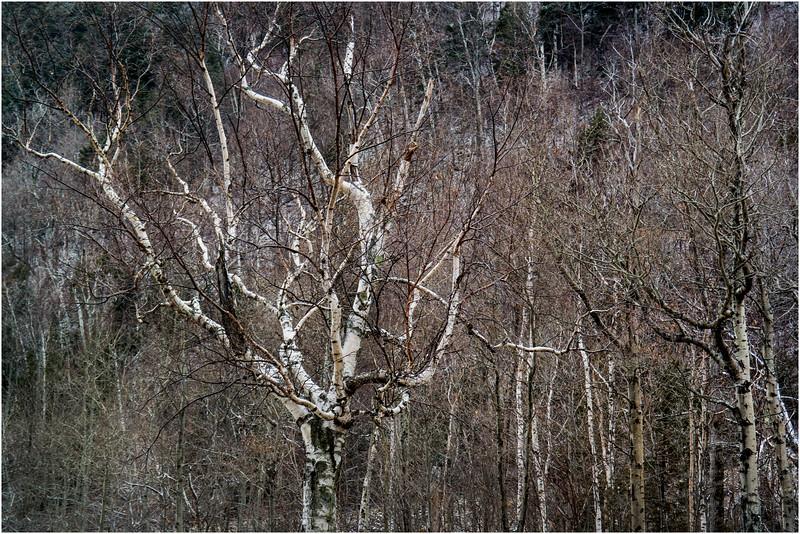 Adirondacks Keene November 2015 Cascade Pass Trees 4